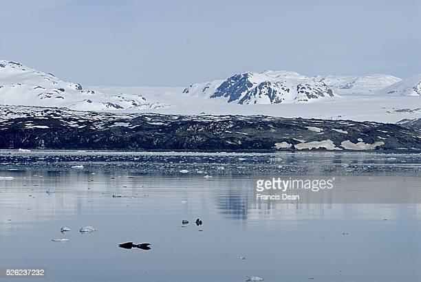 USA _Glacier bay and Glacier mountains 24 May 2012