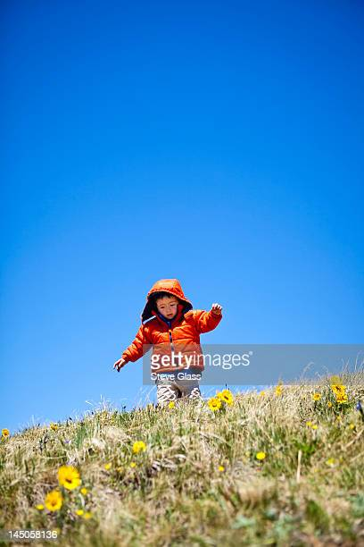 a 2 year old hikes and frolics through an alpine meadow that is littered with yellow alpine wildflowers (daisy like) that follow the sun. He is near the Continental Divide Trail (CCT, trail number 813) north of Squaw Pass at approximately 12,480 feet.