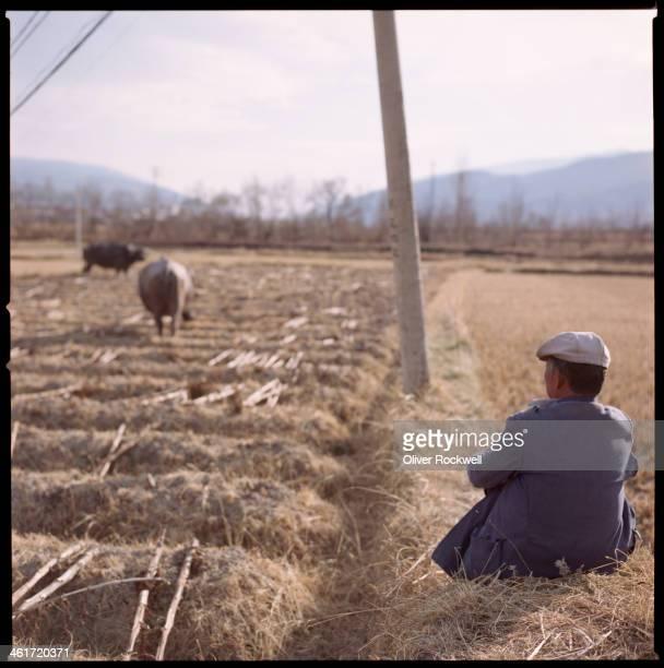 CONTENT] a Bai minority farmer watches over his grazing cattle in Shaxi Jianchuan County Dali Bai Autonomous Prefecture Yunnan Province China