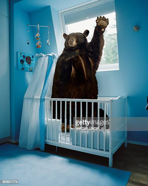 a bear inside a crib in a blue room - blue bear stock photos and pictures