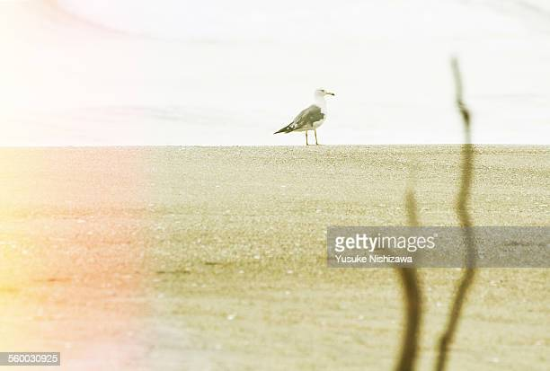 a bird strolls on seaside - yusuke nishizawa stock pictures, royalty-free photos & images