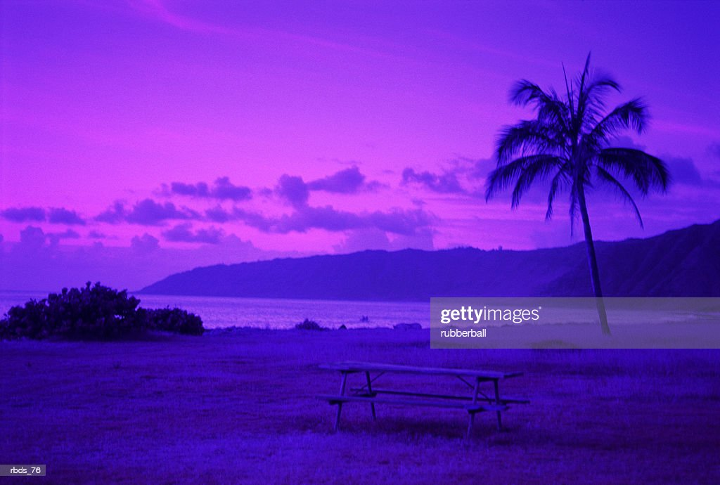 a bright fuscia and purple landscape with a palm tree mountains and beach : Stockfoto