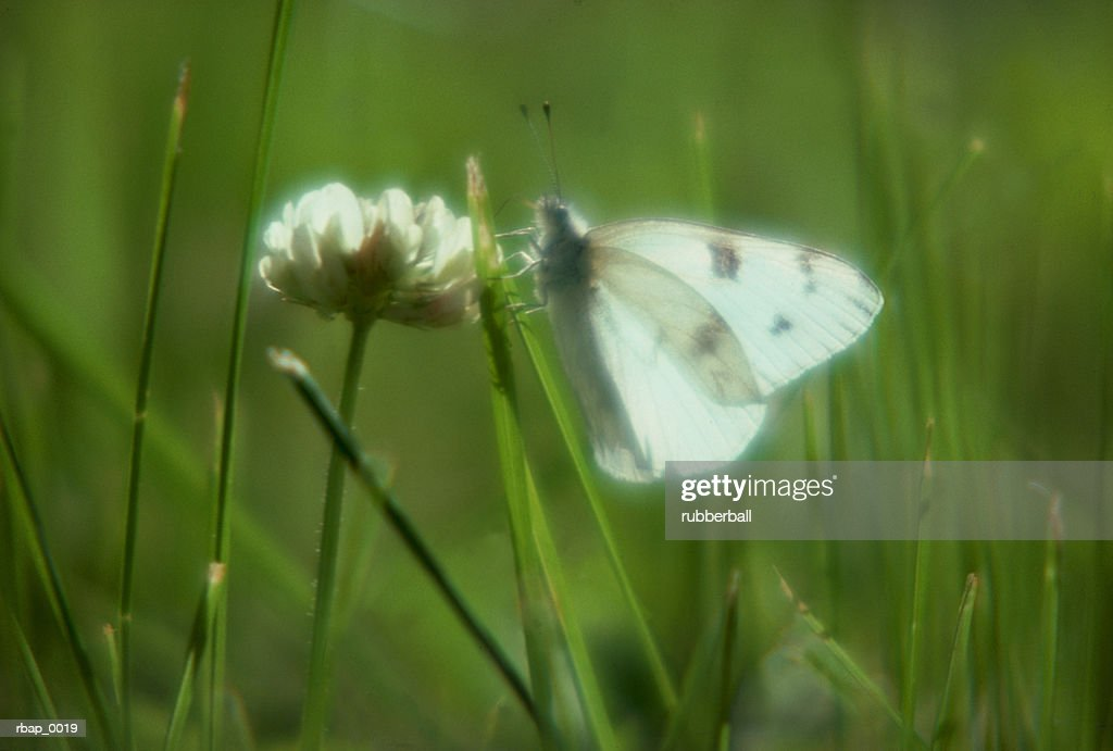 a butterfly rests on a flower in the grass : Stockfoto