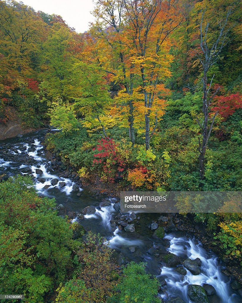 A Canyon With Several Autumncolored Trees On The Side High Angle ...