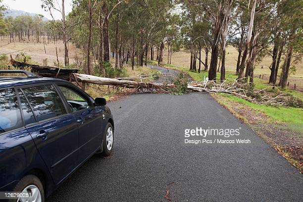 a car stopped where a tree has fallen across a road - fallen tree stock pictures, royalty-free photos & images