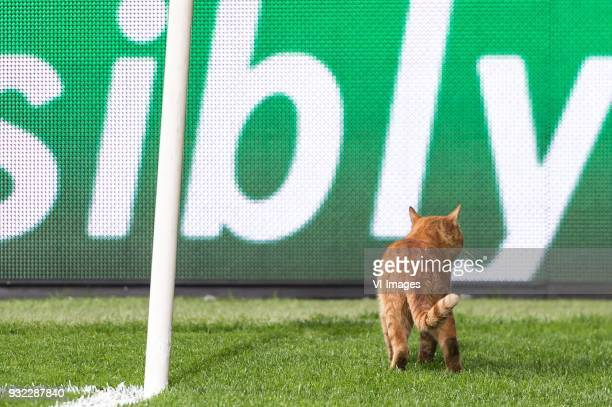 a cat on the pitch during the UEFA Champions League round of 16 match between Besiktas AS and Bayern Munchen at the Vodafone Arena on March 14 2018...
