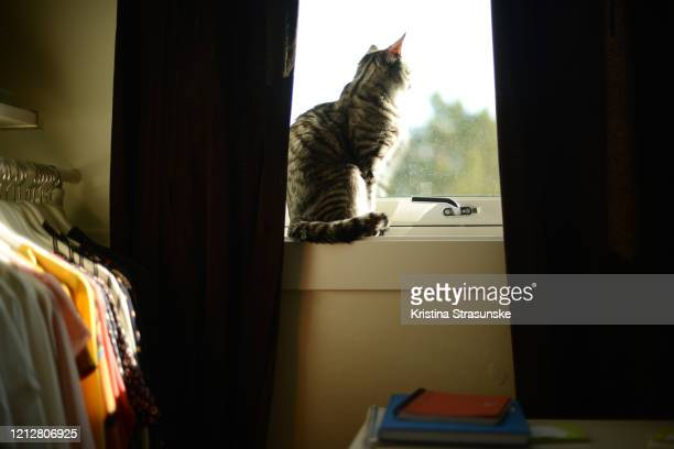 a cat sitting in a windowsill - kristina strasunske stock pictures, royalty-free photos & images
