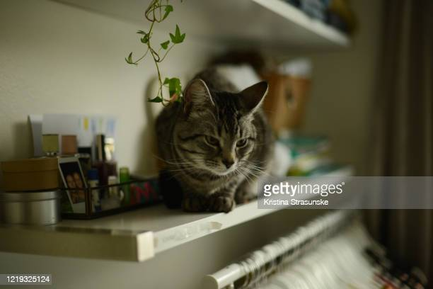 a cat sitting on a shelf in a walk-in closet - kristina strasunske stock pictures, royalty-free photos & images