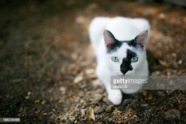 a cat with green eyes