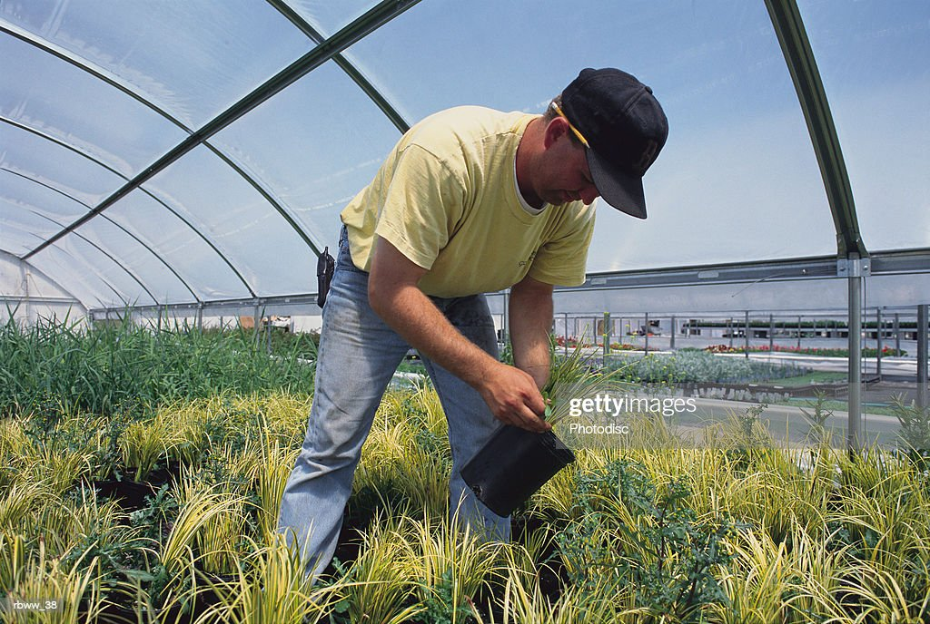 a caucasian man inspects his plants while standing in a greenhouse : Foto de stock