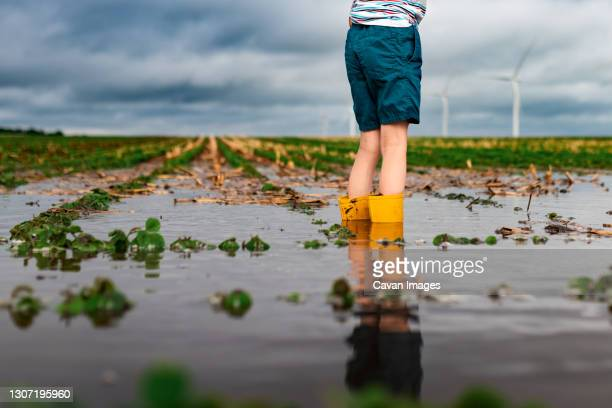 a child standing in flooded waters on a soybean field near a wind farm - natural disaster stock pictures, royalty-free photos & images