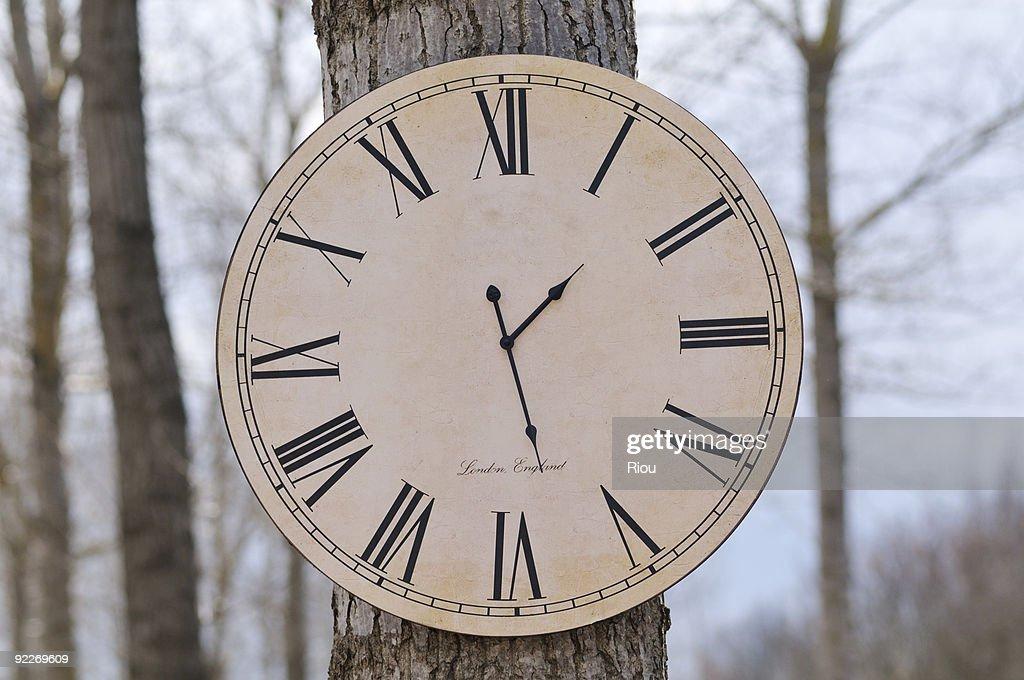 a clock stuck on tree : Stock Photo