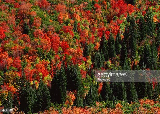 a close up photograph of an autumn forest