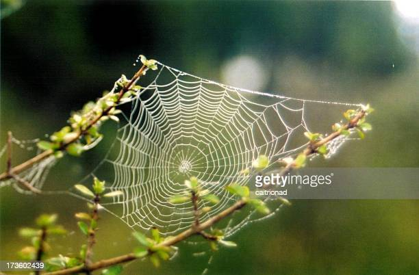 a cobweb with dew drops