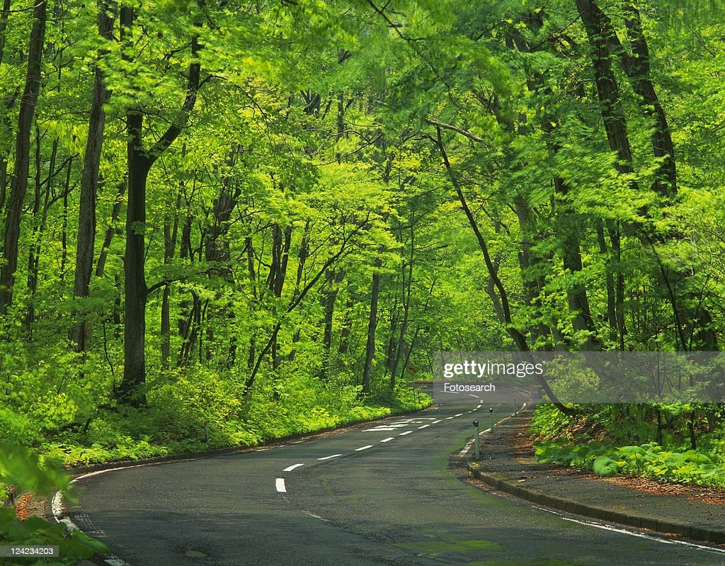 A Country Road Surrounded By A Bunch Of Light Greencolored Trees ...