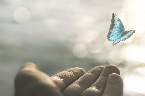 a delicate butterfly flies away from a woman's hand 1178931203
