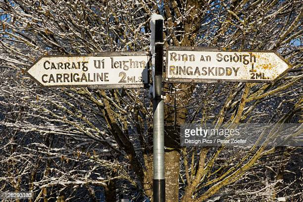 a distance sign on a post against a tree in winter near carrigaline