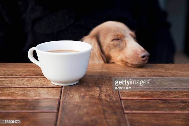 a dog and a coffee cup at cafe
