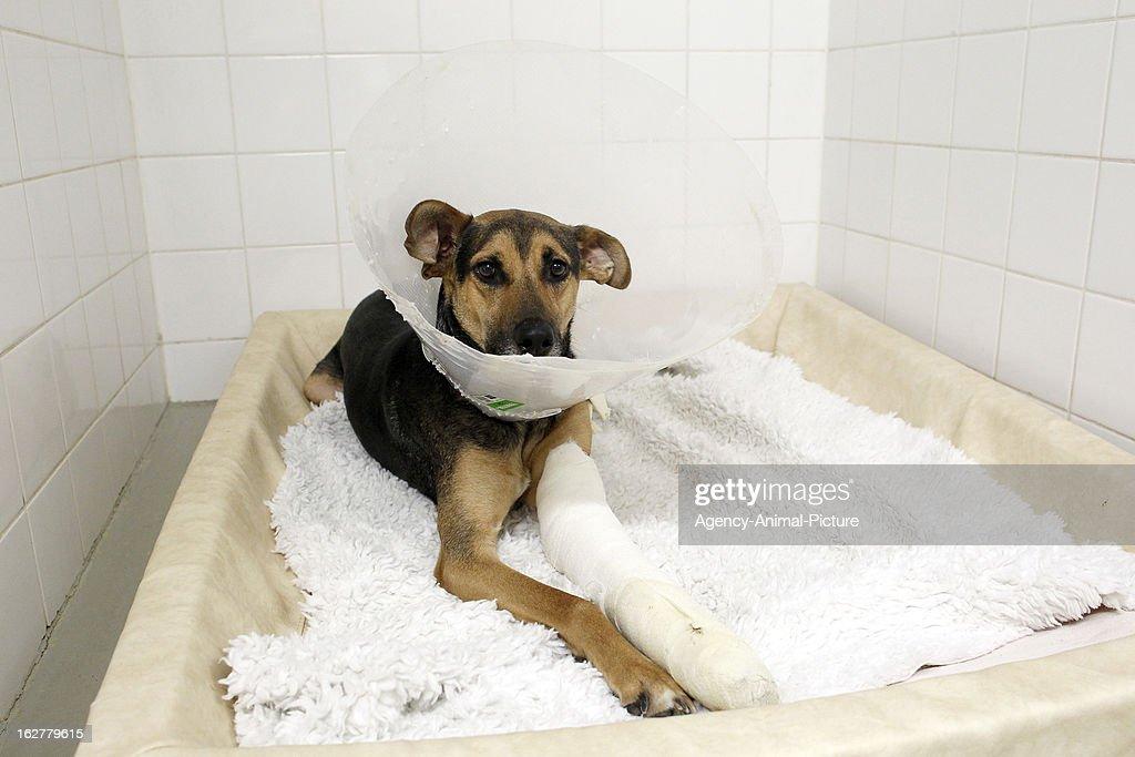 Surgical And Gynecological Animal Hospital Ludwig-Maximilians-University Munich : News Photo
