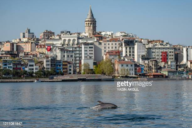 A dolphin swims in the Bosphorus by Galata tower, where sea traffic has nearly come to a halt on April 26 as the city of 16 million has been under...