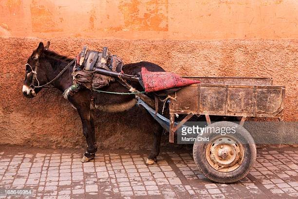 a donkey and cart in the souks of Marrakech