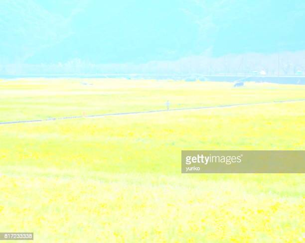 a girl in a field of flowers