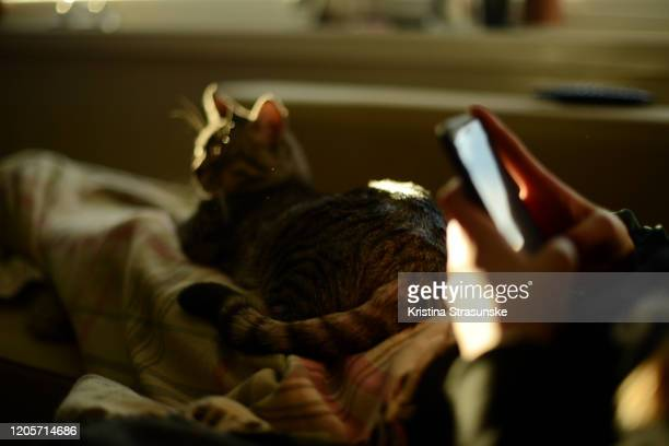 a girl sitting with a cell phone in her hands and a cat on her lap - kristina strasunske stock pictures, royalty-free photos & images