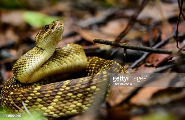 snake waiting foliage