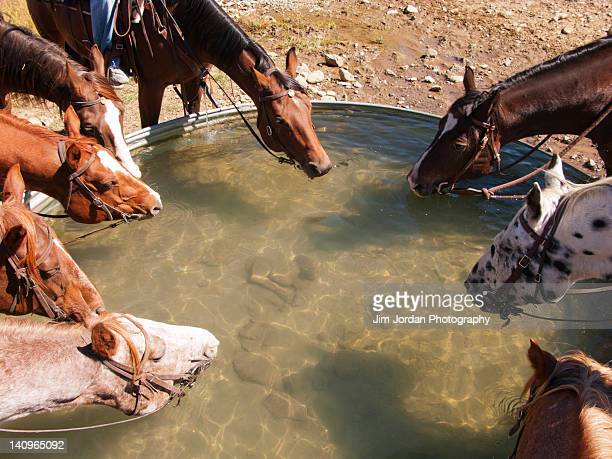 a group of horses drinking from a trough