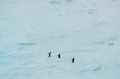 a group of penguins walking on the iceberg - gettyimageskorea