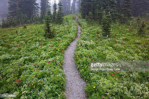 a hiking trail in the fog in paradise park in mt. rainier national park
