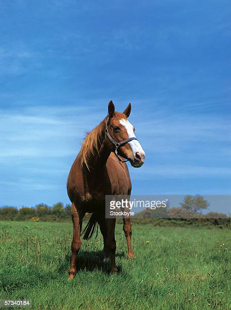 a horse in a grassy meadow