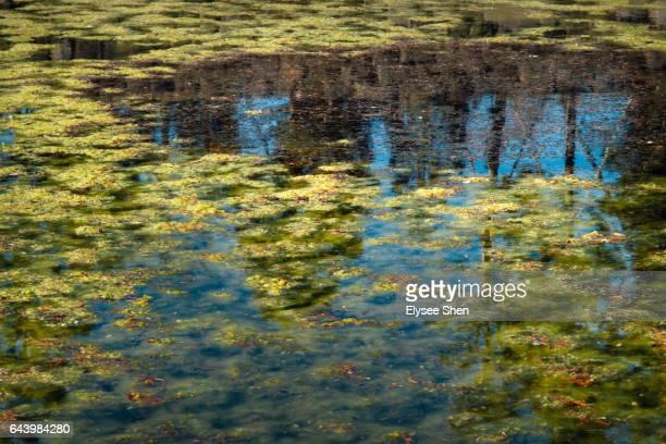 a lake like a impression painting