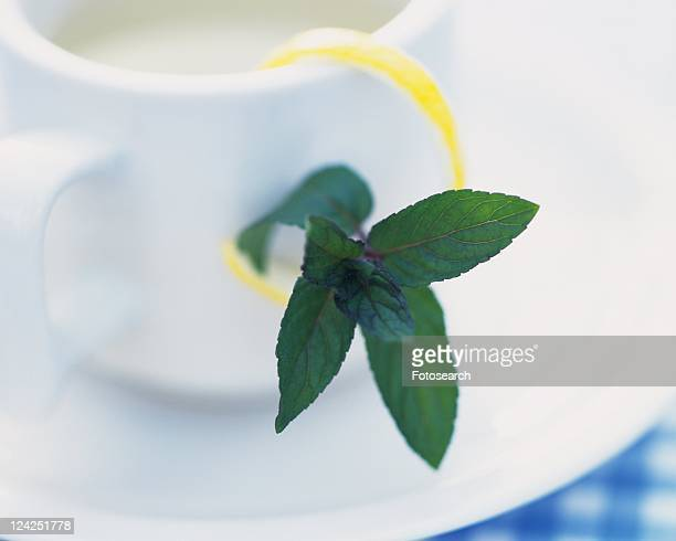 a Little Spearmint, Next to a White Porcelain Cup, High Angle View, Differential Focus