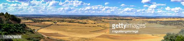a loamy plain in the field with the cereal about to be harvested - provincia de cuenca fotografías e imágenes de stock