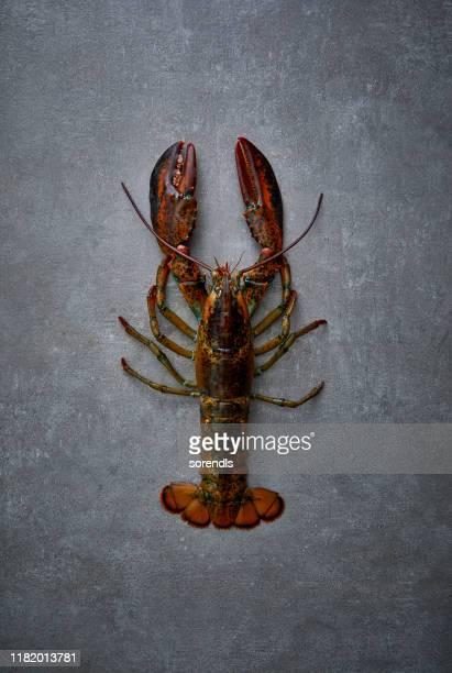 un homard sur la surface en béton - homard photos et images de collection
