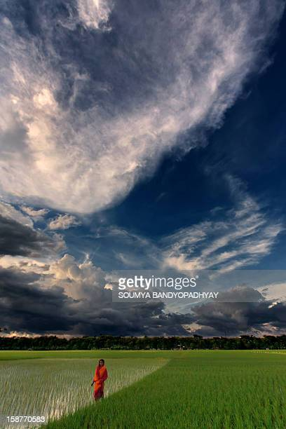 CONTENT] a local woman in red sari crosses a green paddy field while clouds create beautiful patterns on the blue sky just before sunset so...