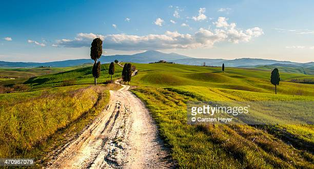 a long tuscan country lane