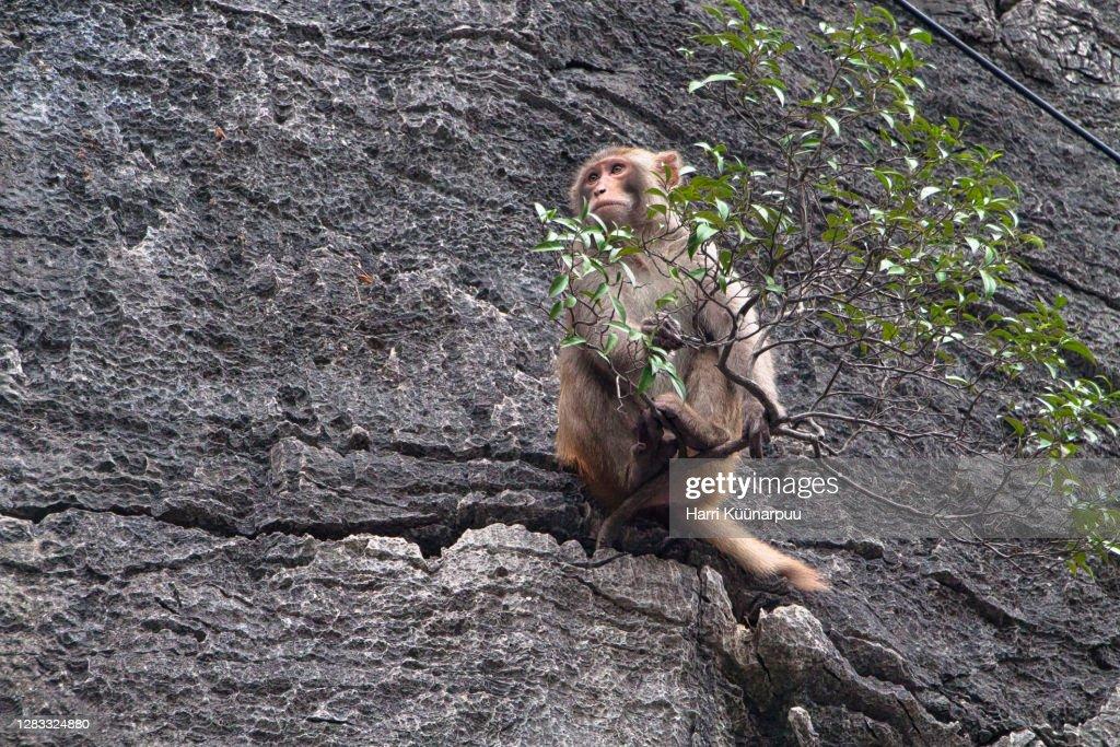 a monkey on a rock : Stock Photo