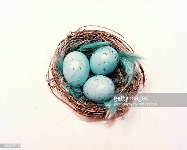 a nest of little eggs
