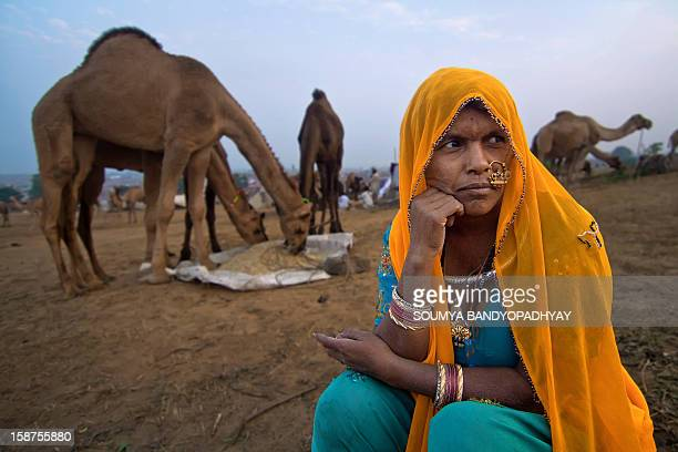 A nomad rajasthani woman sits in front of her camels and hopes to sell them to earn money for living. Shot at pushkar camel fair 2010, rajasthan....