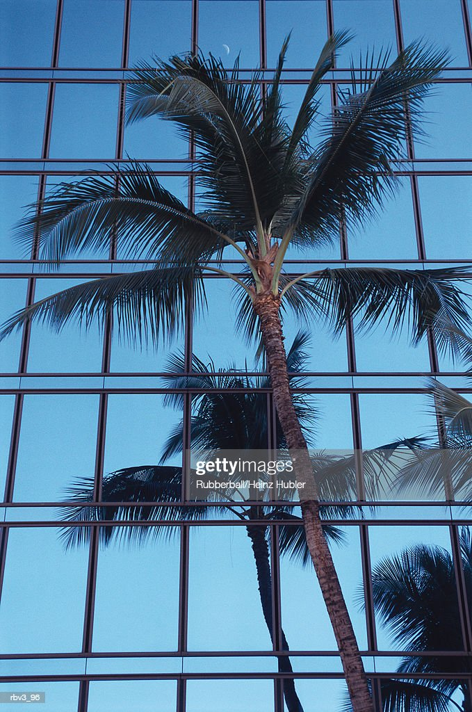 a palm tree stands in front of a glass building as it is being reflected : Foto de stock