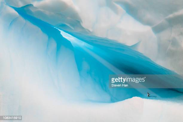 a penguin playing on the iceberg - antarctique photos et images de collection