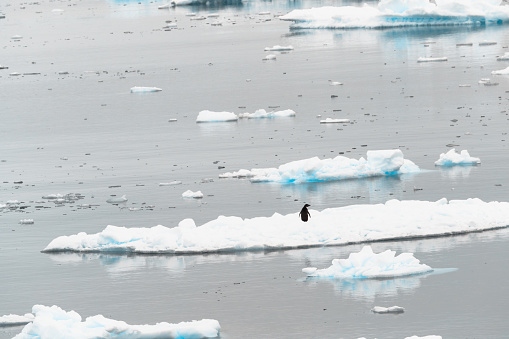 a penguin playing on the iceberg - gettyimageskorea