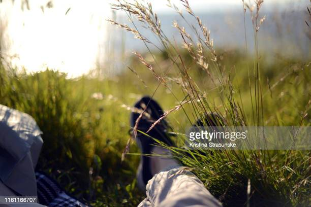 a person laying on a blanket on a grass in a beautiful summer sunlight - kristina strasunske stock photos and pictures