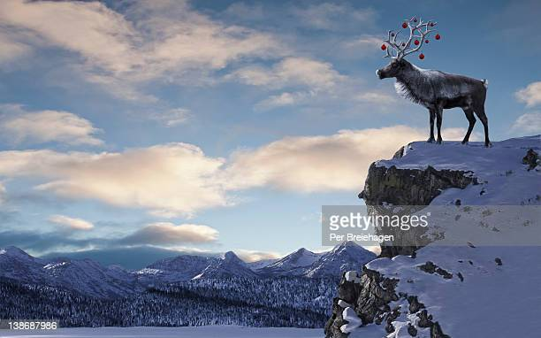 a reindeer with ornaments in his antlers on cliff