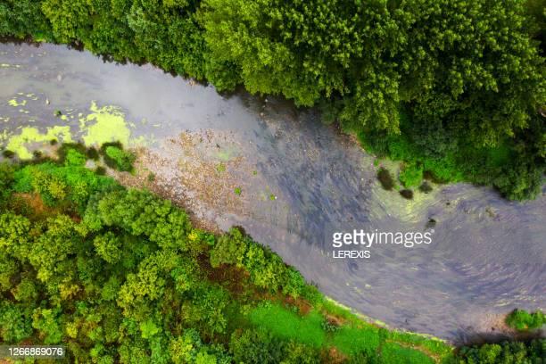 a river flowing through a forest filmed by a drone - dique barragem imagens e fotografias de stock