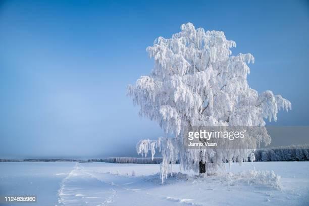 een enkele boom in een leeg veld - eén boom stockfoto's en -beelden