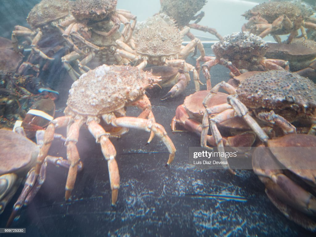 a transparent tank of water in which spider crab, crabs and lobster  are kept. : Stock-Foto
