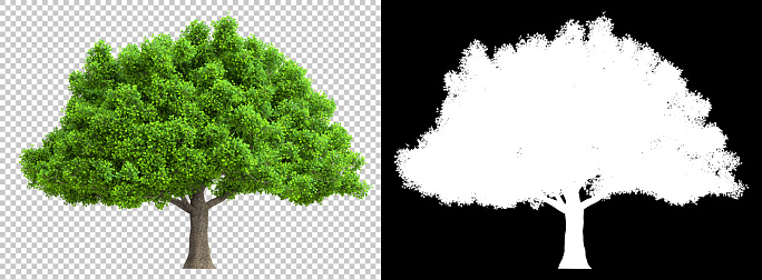 a tree isolated with high detailed leaves with clipping path and alpha channel 1146518839